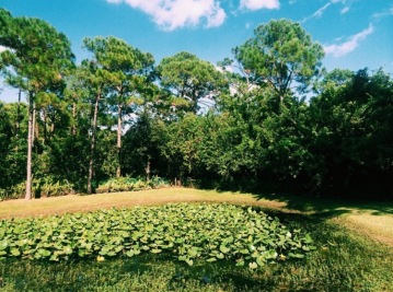 Florida, 2015